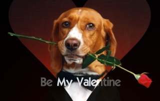 Be My Valentine wallpapers and stock photos