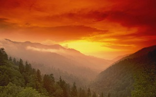 Trees Peak Foggy Orange Sunset wallpapers and stock photos