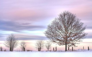 Bare Trees Fence Snowy Field wallpapers and stock photos
