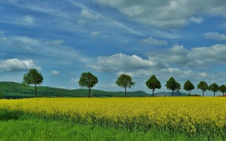 Yellow Flowers Green Trees Sky wallpapers and stock photos