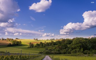 Trees Hills Road Vine Yard Sky wallpapers and stock photos
