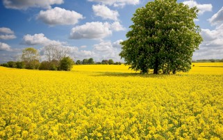 Nice Yellow Flowers Trees Sky wallpapers and stock photos