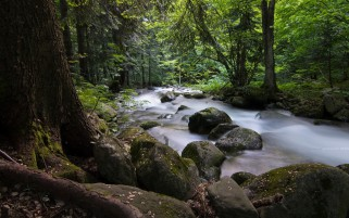 Wild Stream Rocks Forest Sunny wallpapers and stock photos