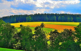 Vibrant Fields Green Trees Sky wallpapers and stock photos