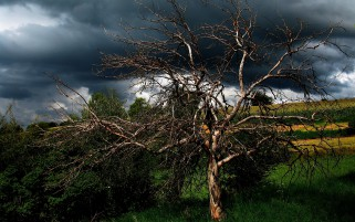Splendid Tree Field Stormy Sky wallpapers and stock photos