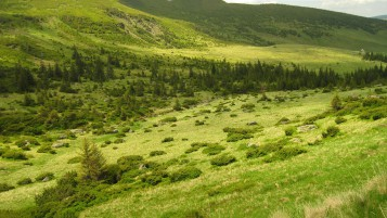 Gorgeous Green Hills y de los árboles wallpapers and stock photos