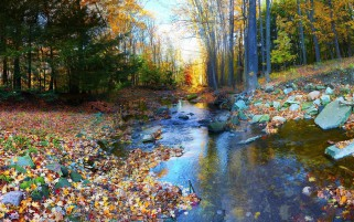 Trees Calm Stream Foliage Rock wallpapers and stock photos