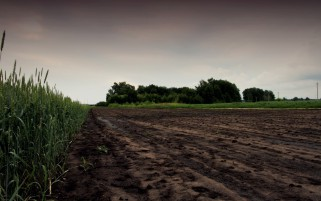 Dirty Road Corn Field Trees wallpapers and stock photos