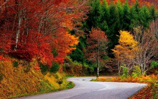Colorful Autumn Trees & Street wallpapers and stock photos