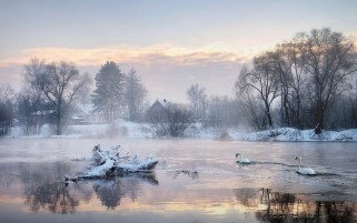 Cold Lake Swans Trees Houses wallpapers and stock photos
