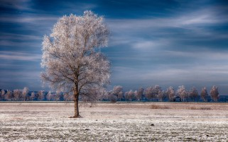 Snowy Trees Field Blue Sky wallpapers and stock photos