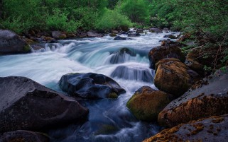 Rushing River Green Plant Rock wallpapers and stock photos