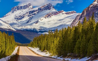 Peaks Road Trees Alberta Banff wallpapers and stock photos