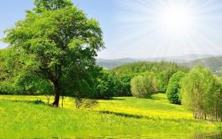 Green Trees Lake Meadow Sunny wallpapers and stock photos