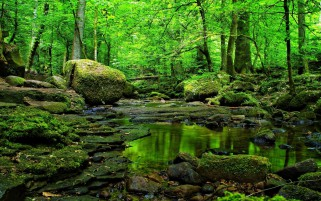 Grass Green Forest Water Rocks wallpapers and stock photos