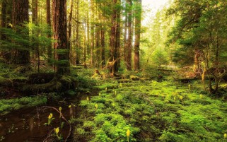 Forest Plants Water Sunny wallpapers and stock photos