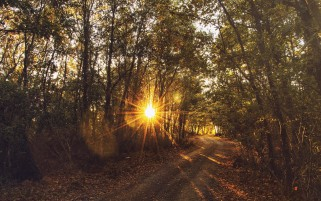 Forest Path Blinded Sunny Sky wallpapers and stock photos