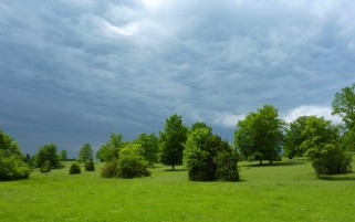 Random: Bright Green Trees Grass Cloud