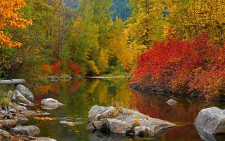 Autumn Trees Lake Rocks wallpapers and stock photos