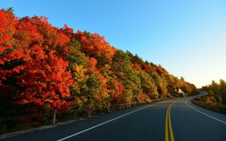 Autumn Trees & Curvy Road wallpapers and stock photos