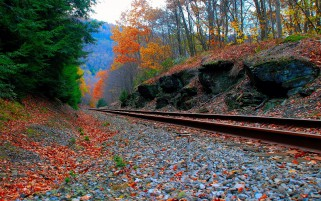 Trees Rail Road Foliage Rocks wallpapers and stock photos