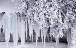 Pretty Icicles Branches Snowy wallpapers and stock photos