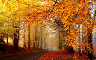 Nice Autumn Forest Way Foliage wallpapers and stock photos