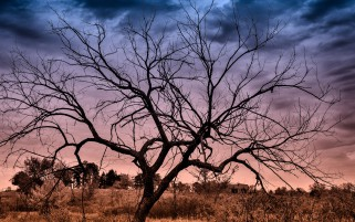 Dried Up Tree Calico Sky wallpapers and stock photos