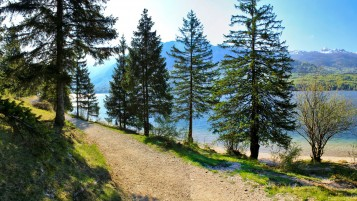 Trees Path Hidden Lake Sunny wallpapers and stock photos