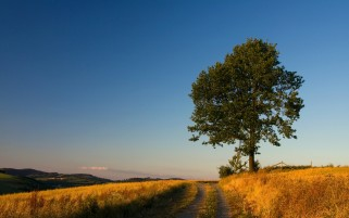 Yellow Fields Path Tree Valley wallpapers and stock photos