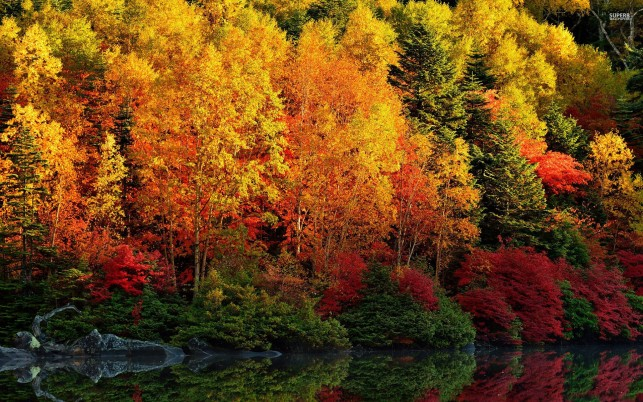 Adorable Autumn Forest & River wallpapers and stock photos