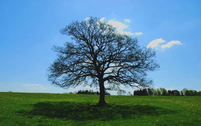 Bare Tree Meadow Shadow Sky wallpapers and stock photos