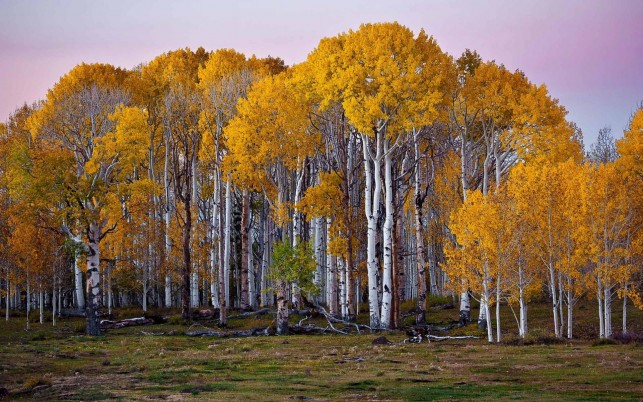 Adorable Birch Forest wallpapers and stock photos