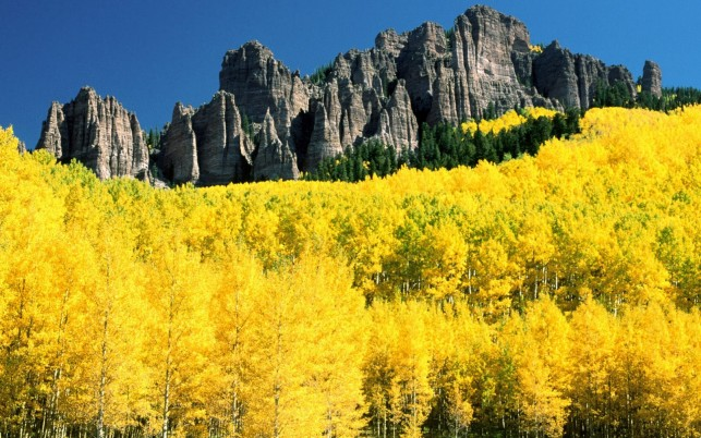Yellow Autumn Forest Colorado wallpapers and stock photos