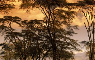 Steppe Trees wallpapers and stock photos