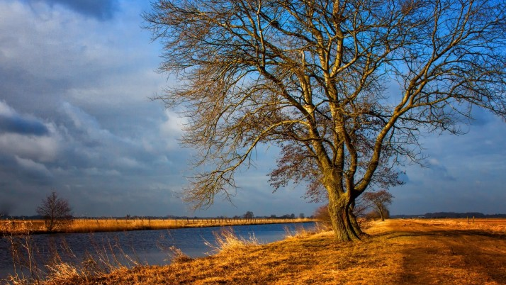 Bare Tree River Path Field Sky wallpapers and stock photos