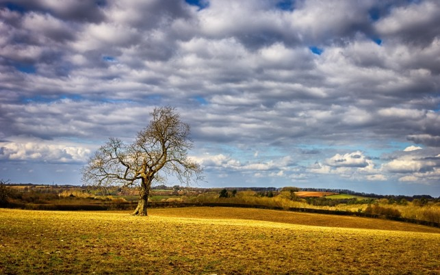 Random: Yellow Field Bare Tree Clouds