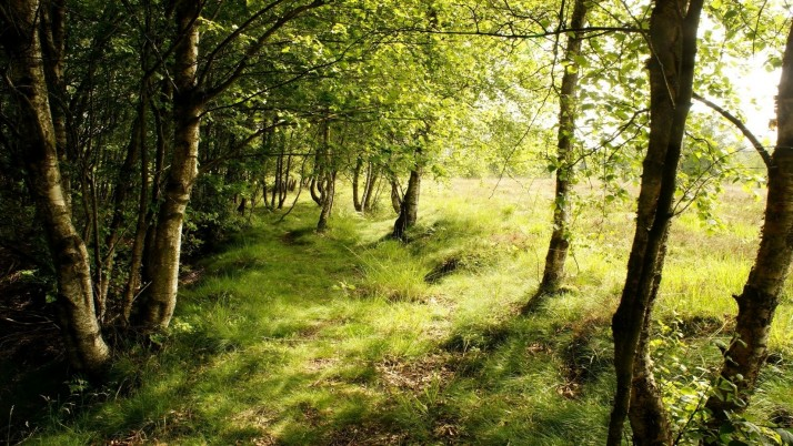 Thicket Wood Grass Field Sunny wallpapers and stock photos