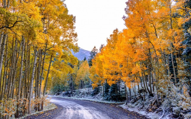 Yellow Trees Lovely Frozen Way wallpapers and stock photos