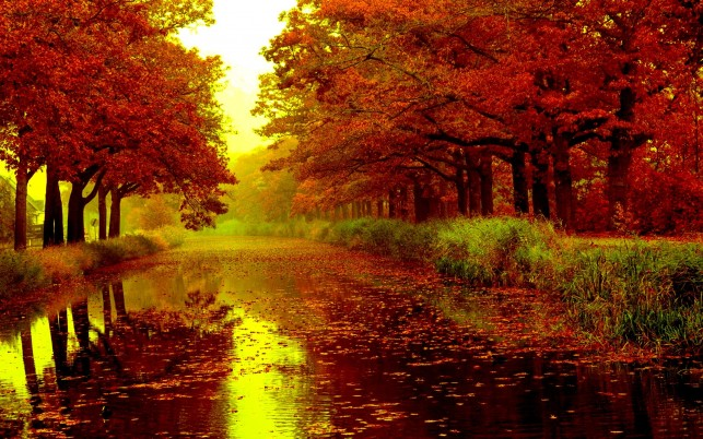 Adorable Red Trees River Leafs wallpapers and stock photos