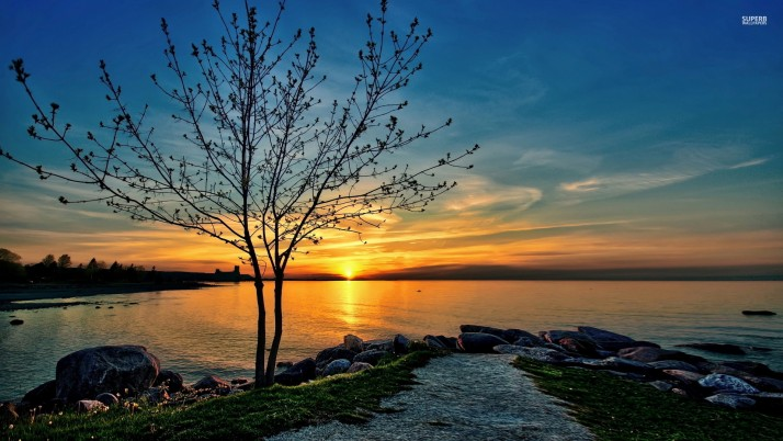 Lake Tree Path Rocks Sunset wallpapers and stock photos