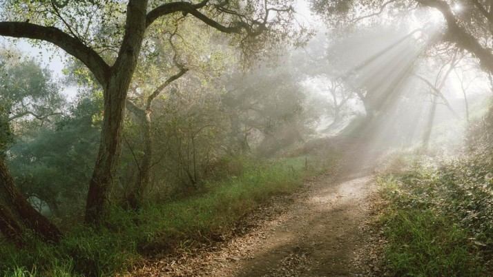 Hidden Forest Path Sun Rays wallpapers and stock photos
