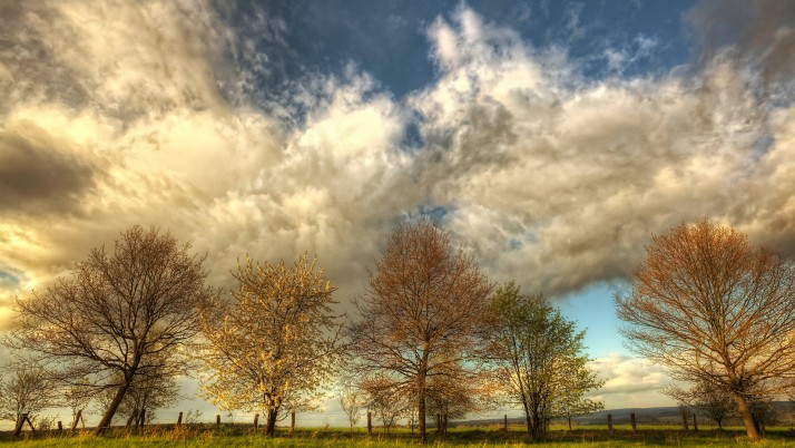 Nice Clouds Golden Trees Field wallpapers and stock photos