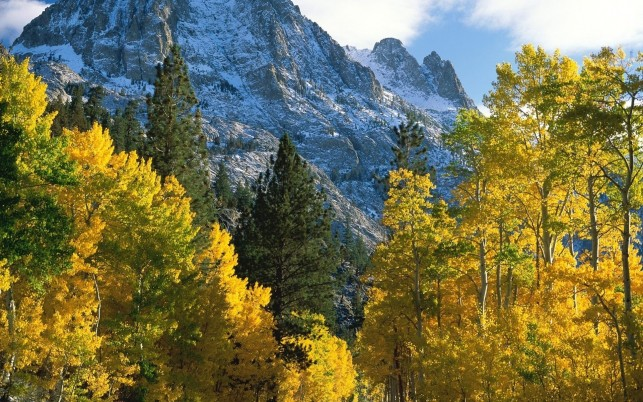 High Peaks Yellow Autumn Trees wallpapers and stock photos