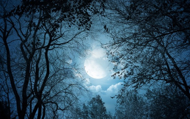 Dark Trees Full Moon Night wallpapers and stock photos