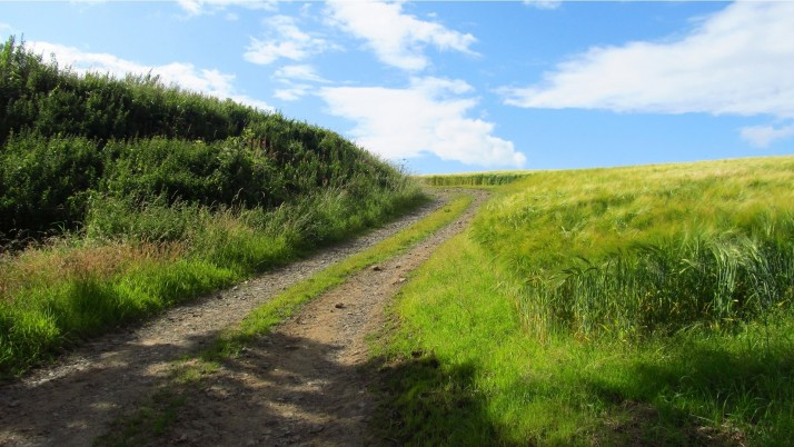 Path Campo de trigo Plantas Verdes wallpapers and stock photos