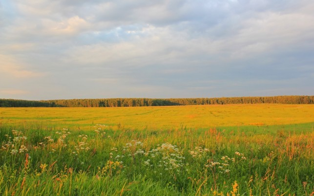 Golden Field Wood Grass Plants wallpapers and stock photos