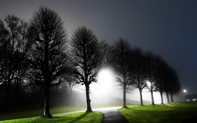 Dark Trees Green Lawn Street wallpapers and stock photos