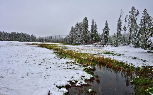 Campo Nevado Creek Hierba Madera wallpapers and stock photos