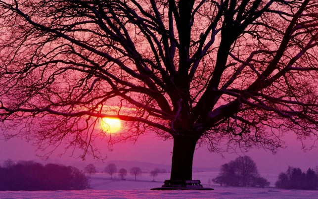 Dark Trees Snowy Pink Horizon wallpapers and stock photos